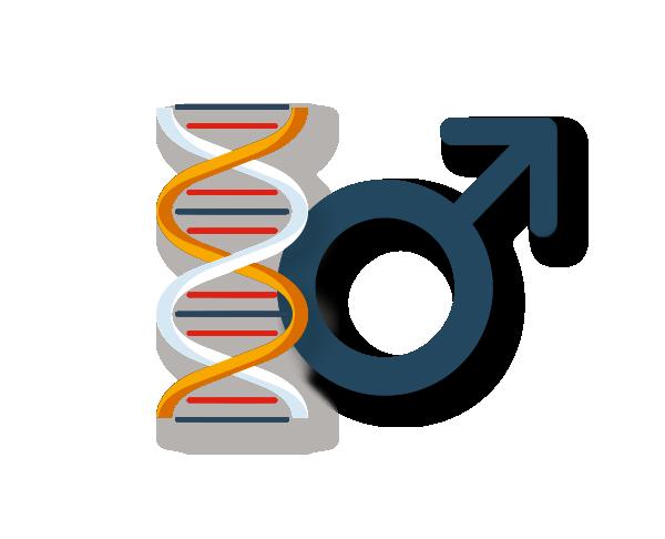 E2 + Testosterone LCMS